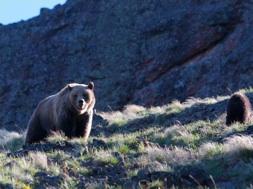 bear-encounter-photo-fernando-boza