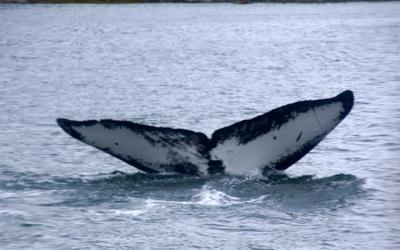 the-awe-inspiring-whale